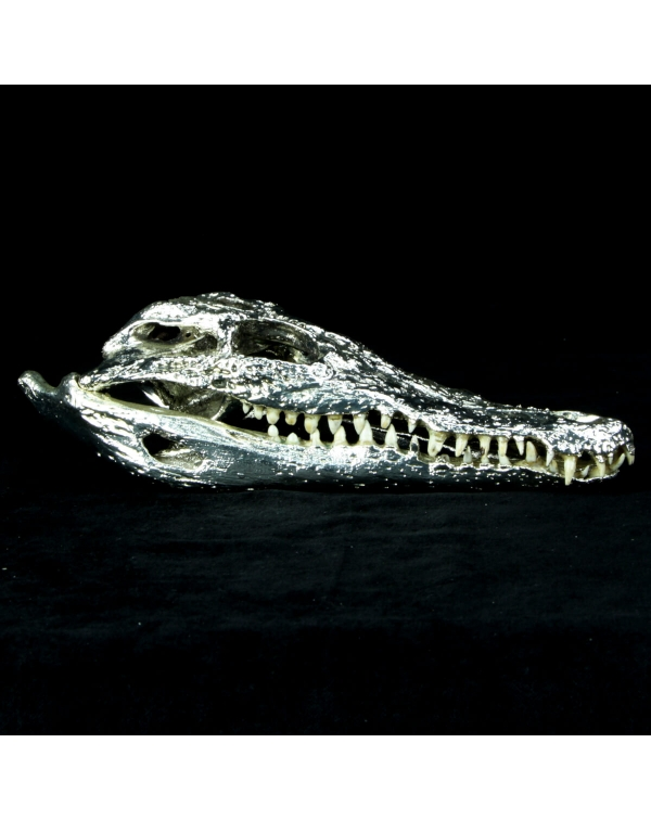 Crocodile Skull in Silver
