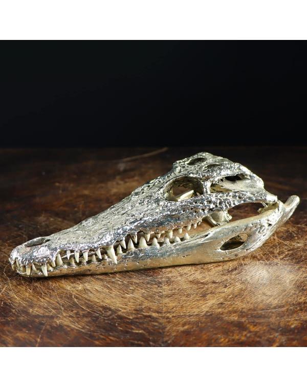 Crocodile Skull in Silver