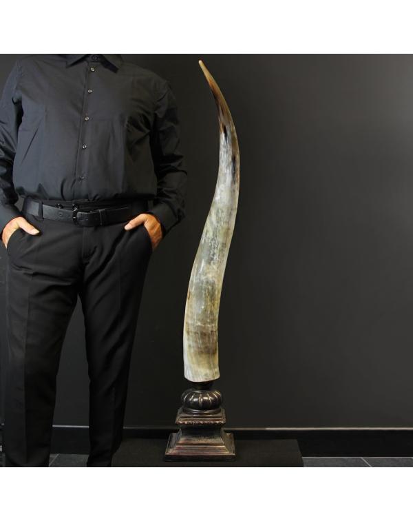 Buffalo Horn on Custom Pedestal