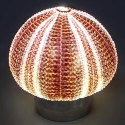 Lamp - Design (3)