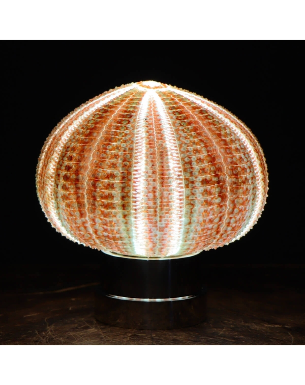 Sea Urchin Lamp