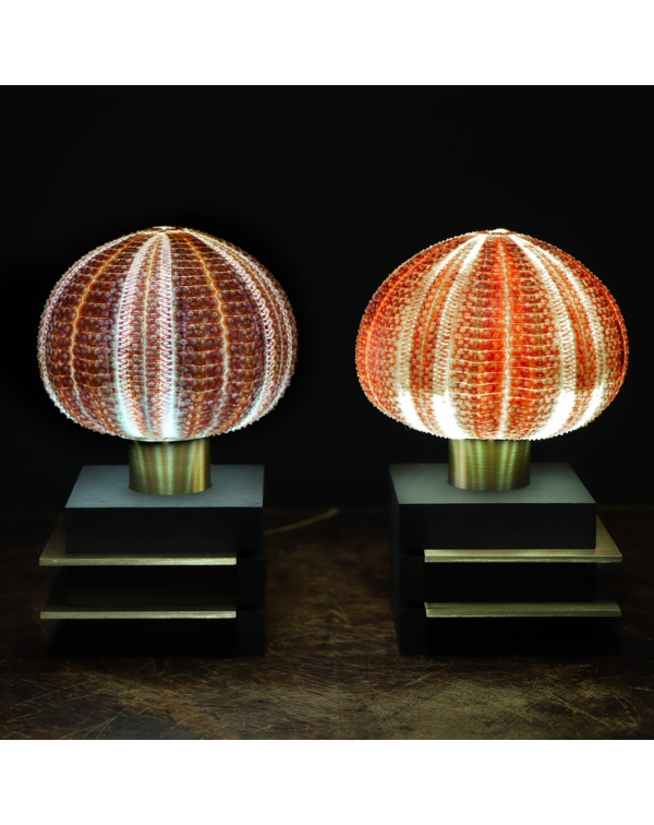 Sea Urchin Lamps