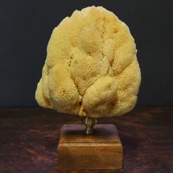 Mounted Sponges (3)