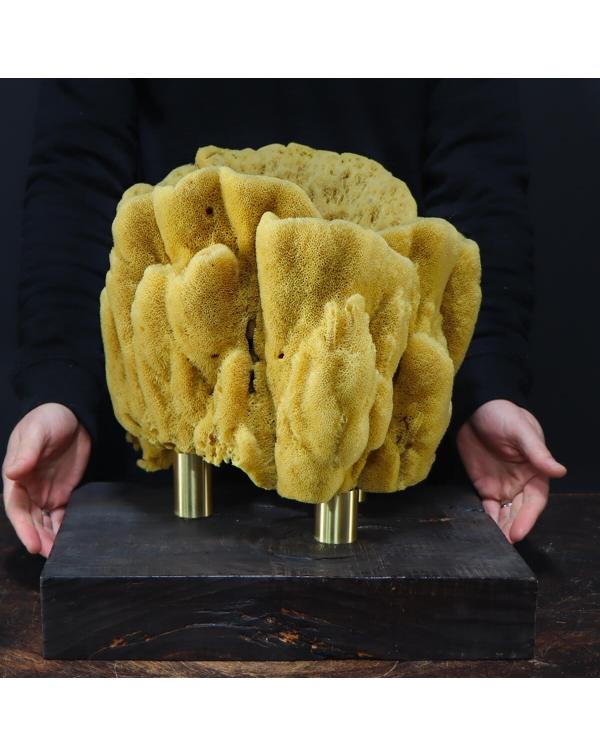 Natural sponge - Spongia Officinalis