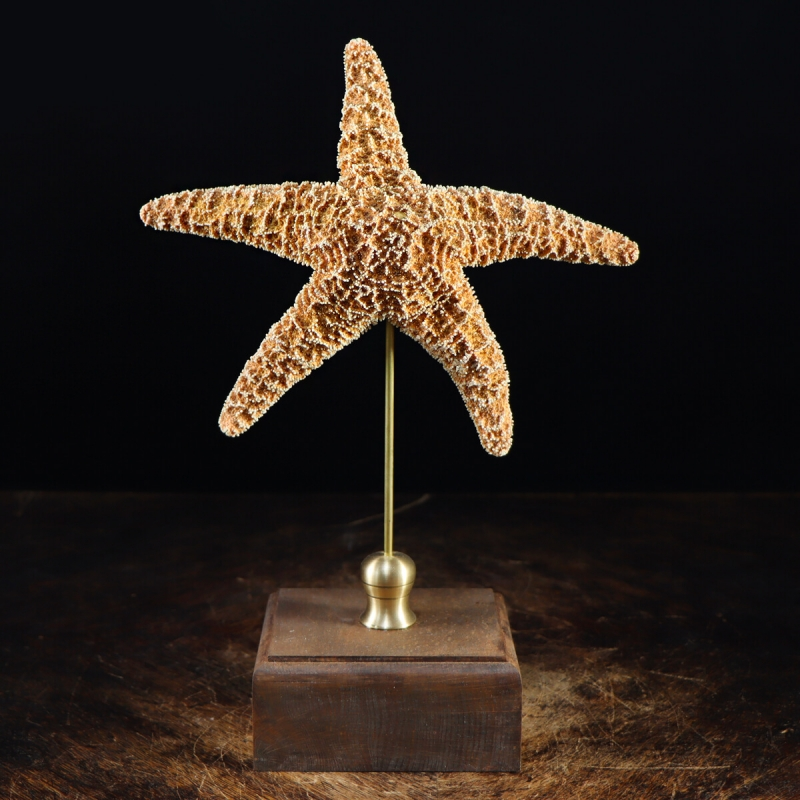 Starfish on Pedestal