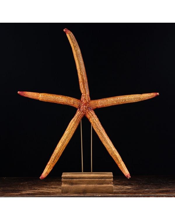 Starfish on Pedestal