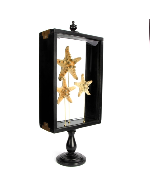 Starfish under Glass Case