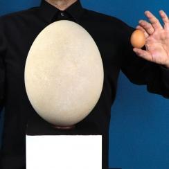 Aepyornis Eggs (4)