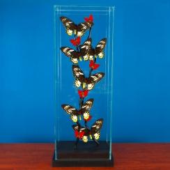 Butterflies (6)