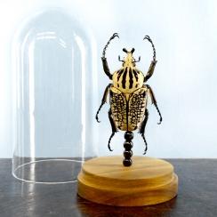 Beetles (6)