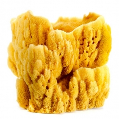 Natural Sponges (3)