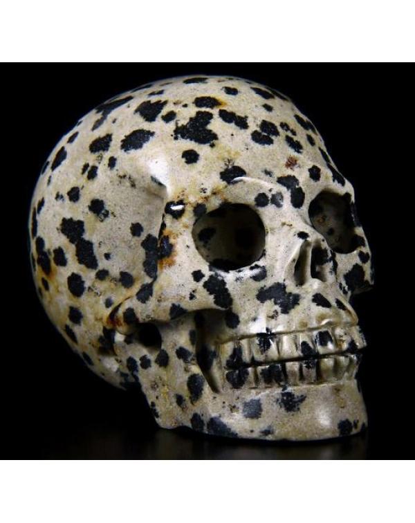 Dalmatine Skull