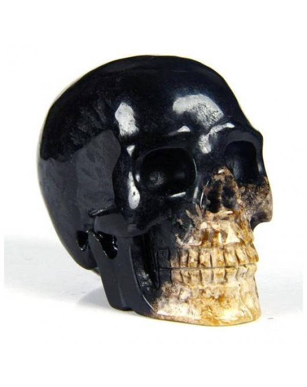 Bug Fossil Agate Skull