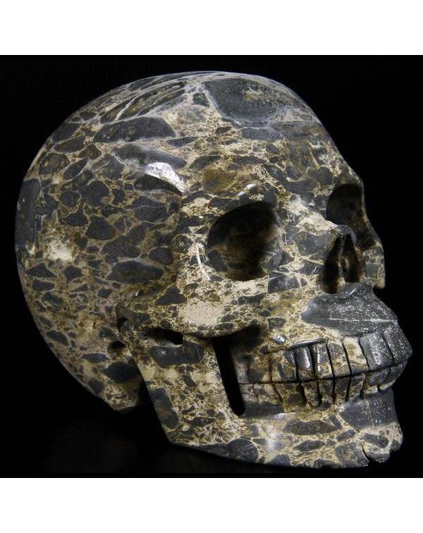 Frog Skin Jasper Skull