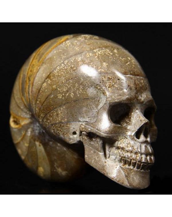 Chamber Ammonite Fossil Skull