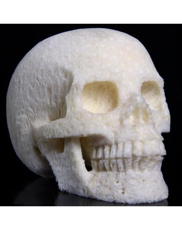 White Coral Skull