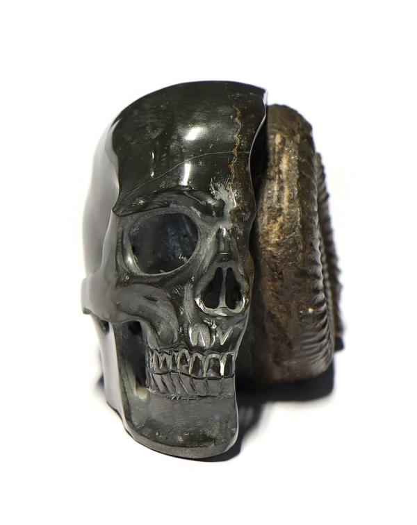 Pyrite Skull with Ammonite