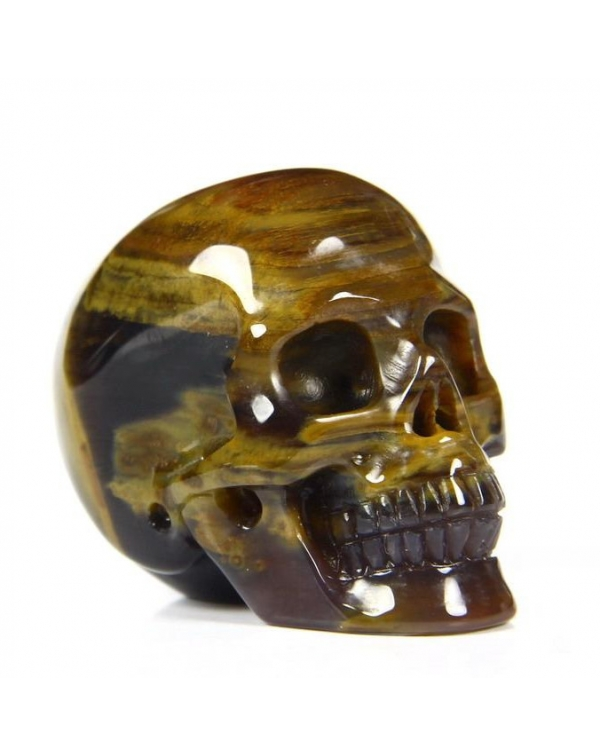Petrified Wood Skull