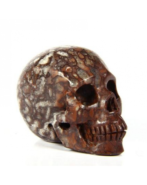 Petrified Coral Fossil Skull