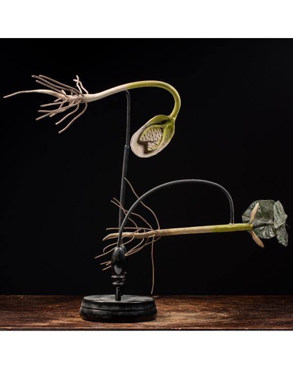 Antique Anatomical Flower Model