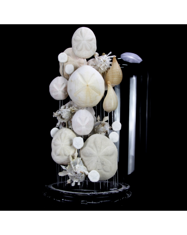 Sand Dollars and Shells under Glass Bell