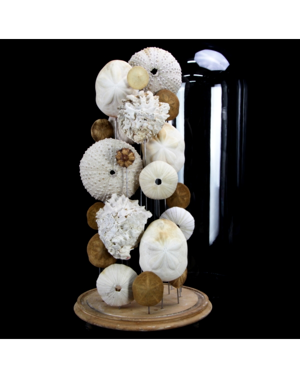 Sea Urchins and Shells under Glass Bell