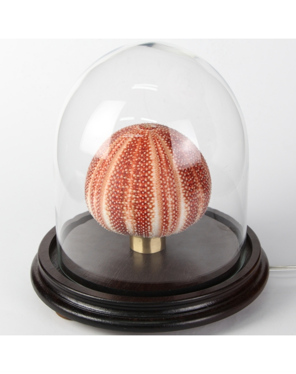 Sea Urchin Lamp under Glass Bell