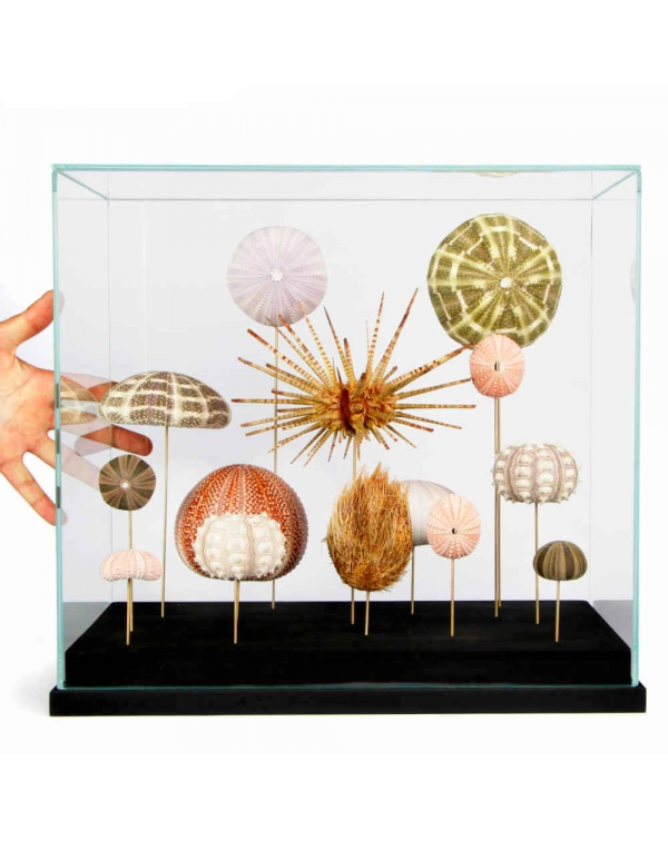 Sea Urchins Under Glass Dome