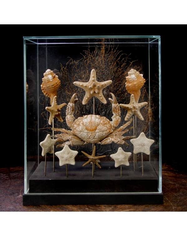 Marine Fauna Under Glass Dome