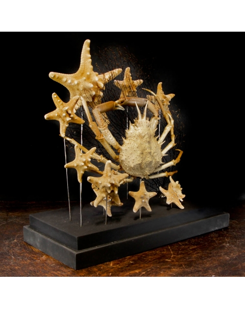 Marine Fauna under Glass Case