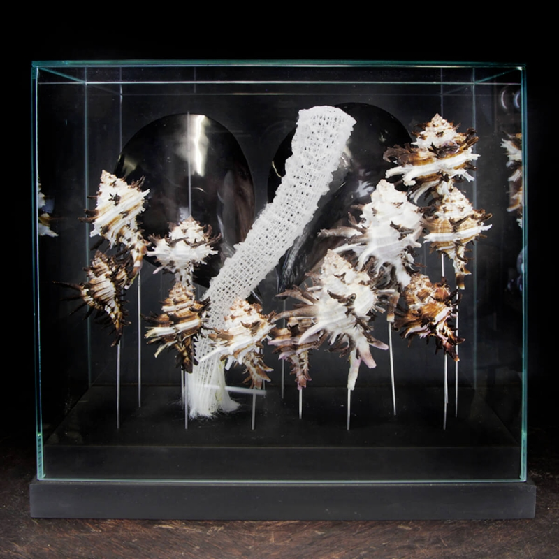 Marine Fauna under Glass Case