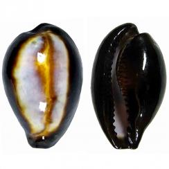 Erronea Onyx (4)