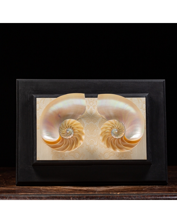 Mother of Pearl Nautilus on wooden frame