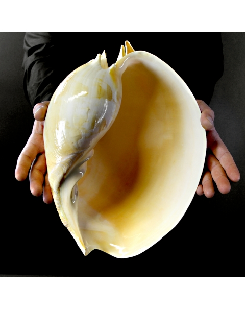 Melo Amphora