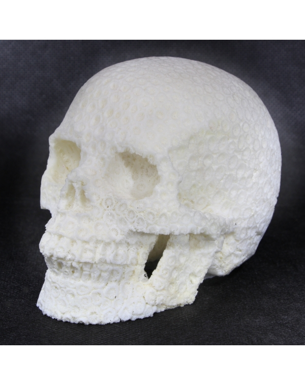 Skull Carved in Coral