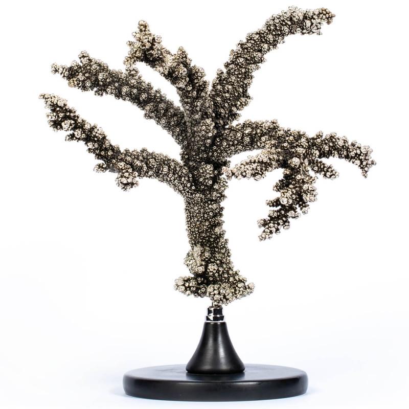 Silver Plate Coral - Acropora Florida