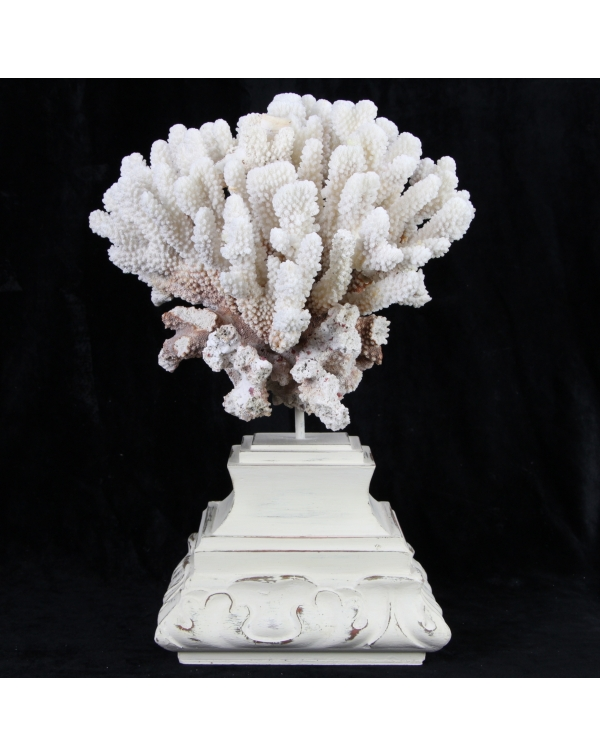 Brown Stem Coral