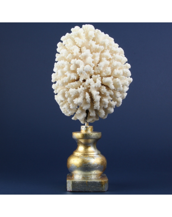 White Decorative Coral