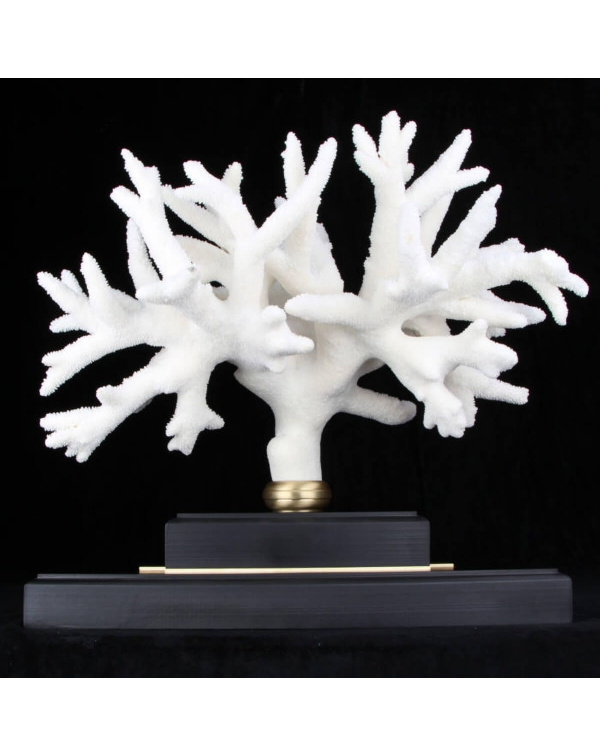 Acropora Coral on custom Pedestal