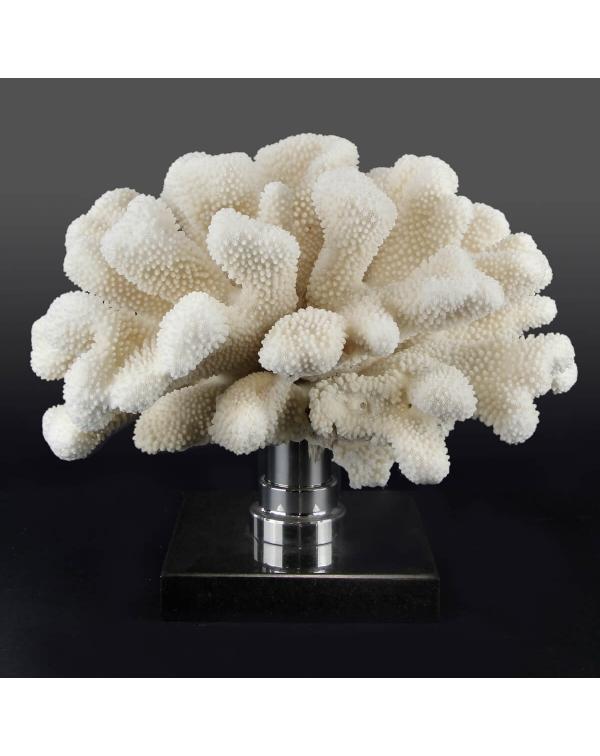 Pocillopora Meandrina