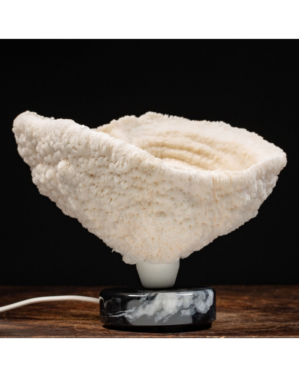 Halomitra Pileus Lamp