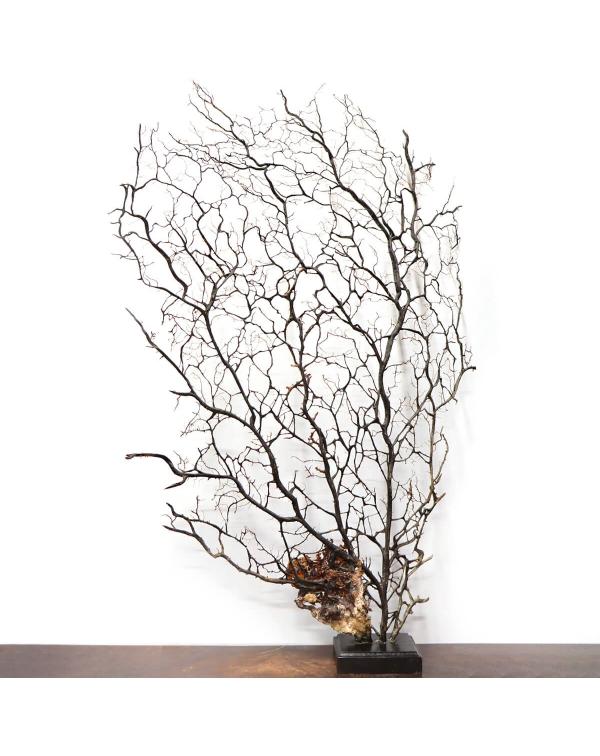 Gorgonian on Pedestal