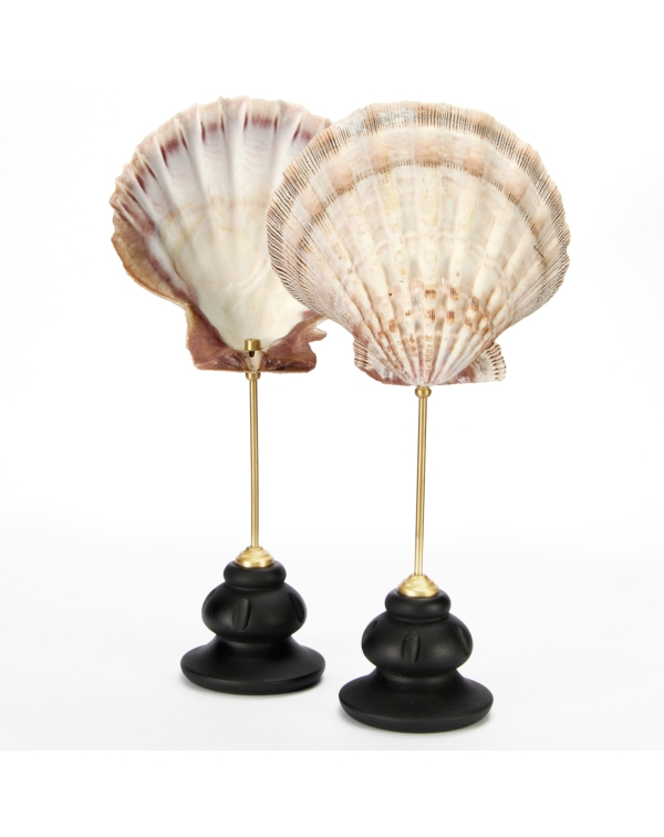 Pair of Pecten Subnodosus on Pedestal