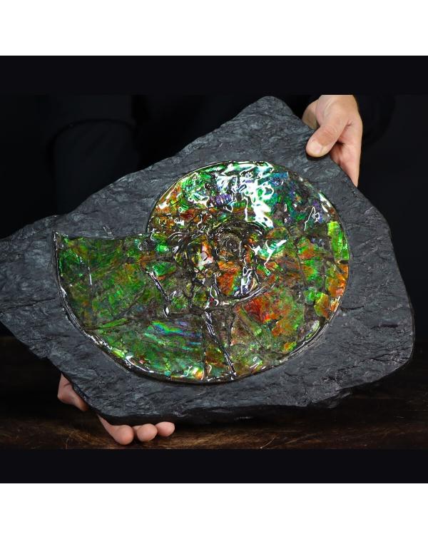 Ammonite Ammolite