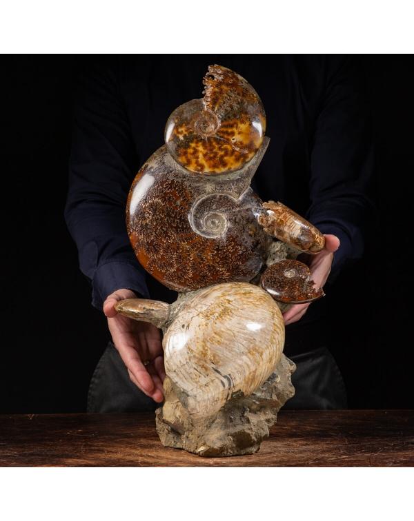 Ammonites and Nautilus Group