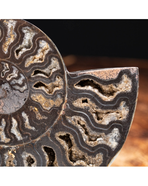 Black Ammonite Cleoniceras