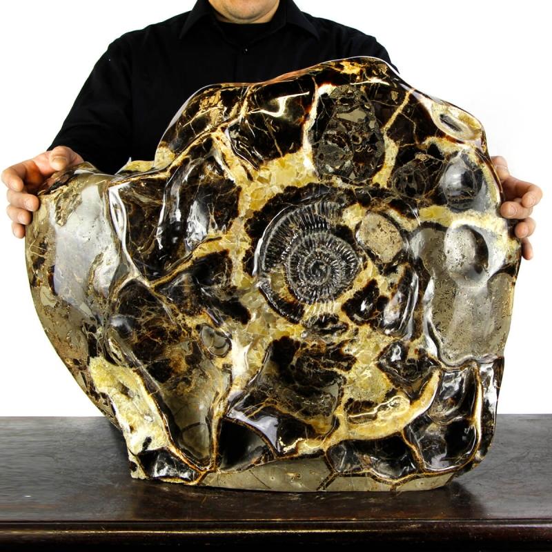 Giant Ammonite in Septaria