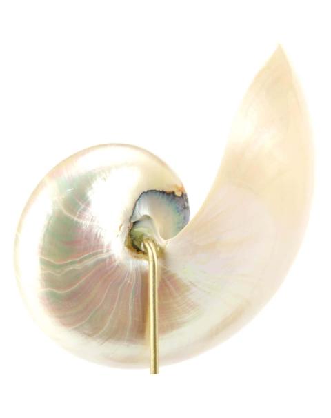 Nautilus Pompilius Madreperla su Piedistallo