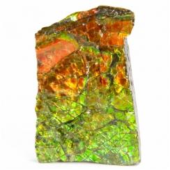 Ammolite (7)