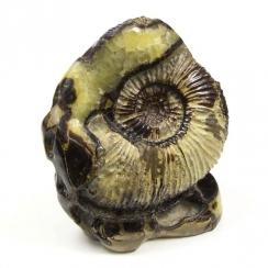 Ammonites on Septaria (10)